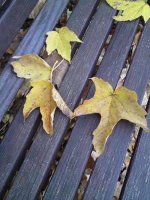 Blätterzeit