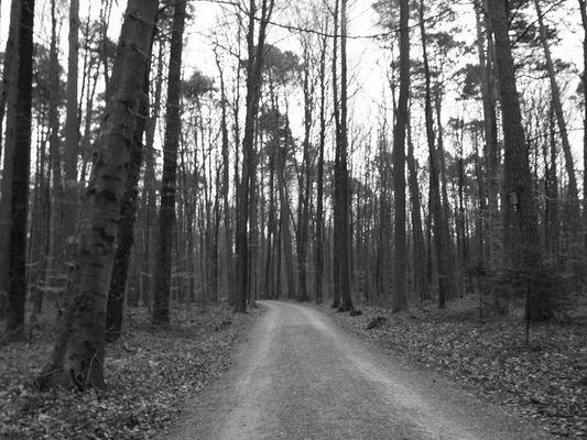 Blair Witch im Sieben-Tisch-Wald