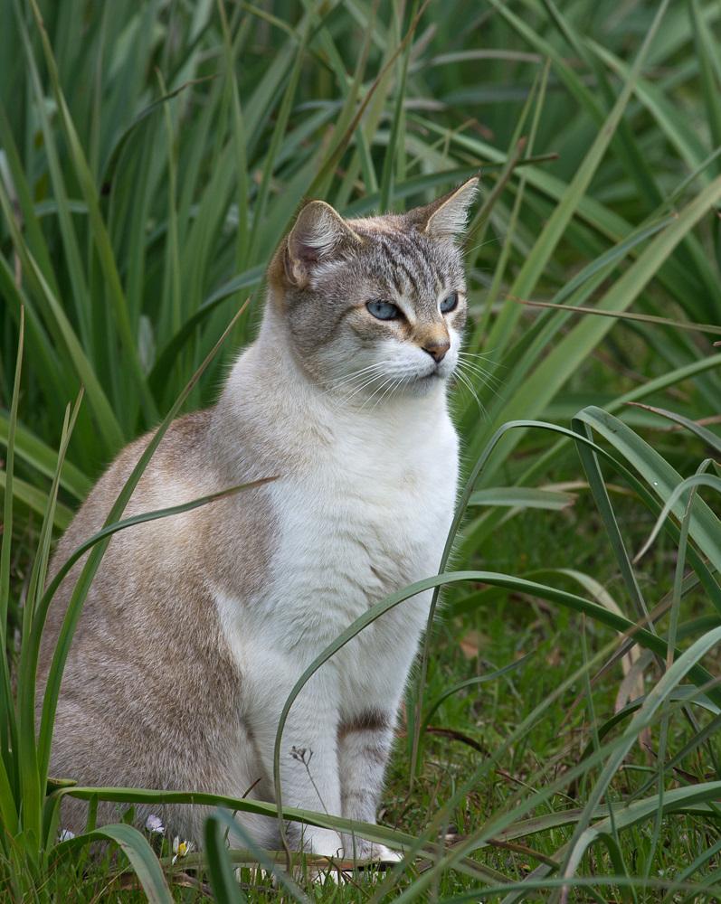 Blanca in den Affodill-Stauden