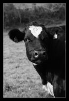 Blanche et noire en noir et blanc !!!