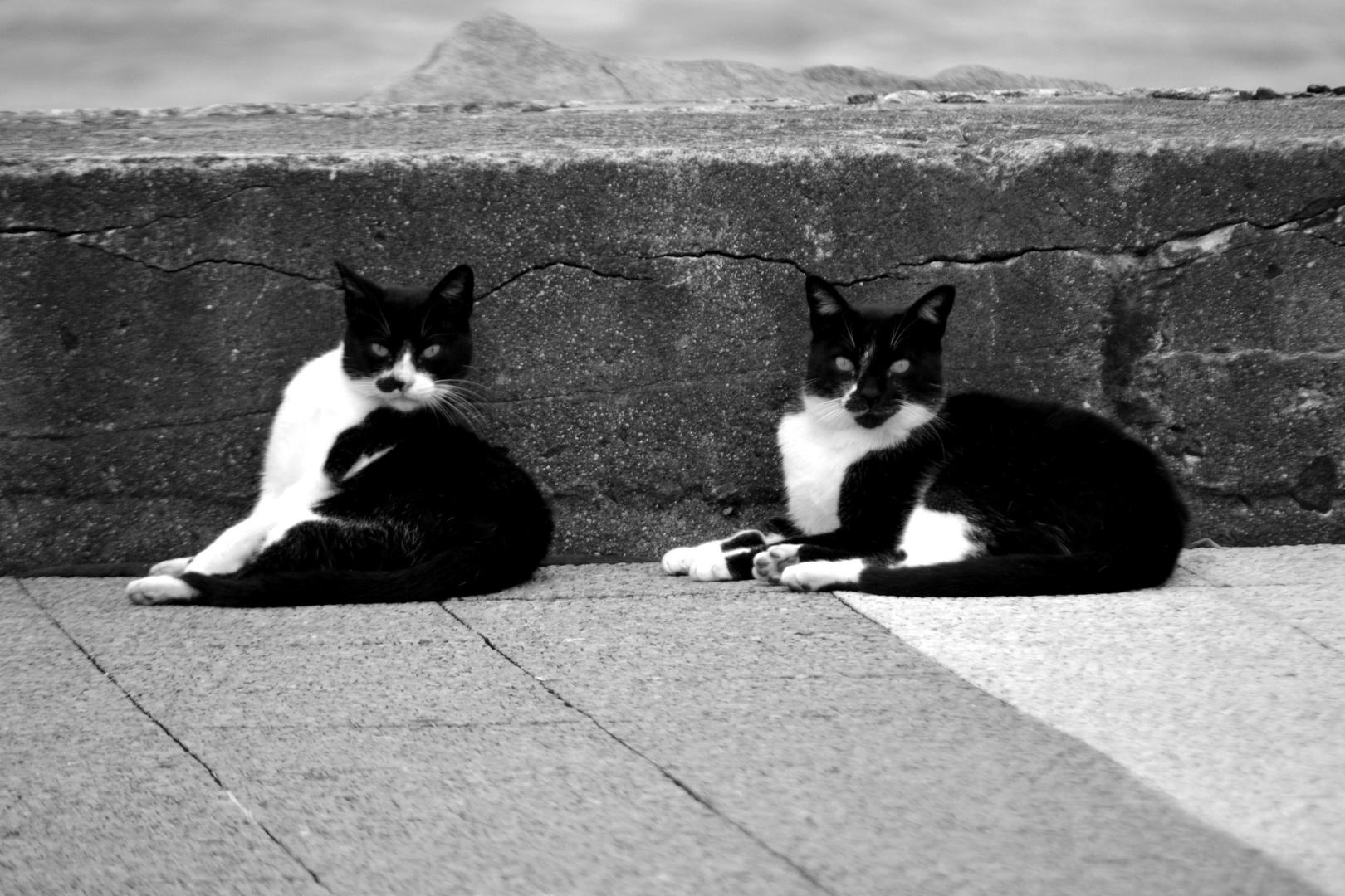 Blanco y Negro. 2