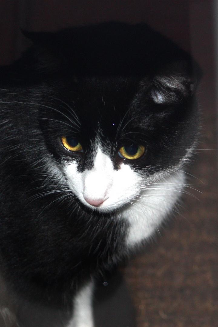 blanco y negro, más gatos