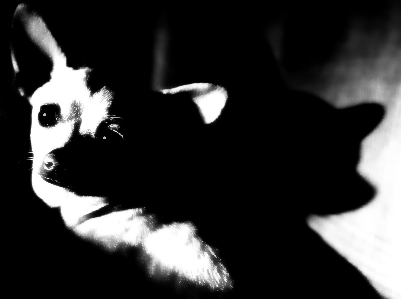 Blanco&Negro