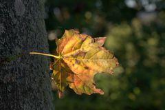 Blatt am Baum