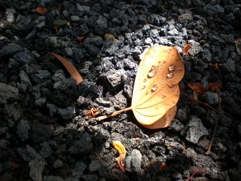 Blatt am Boden liegend