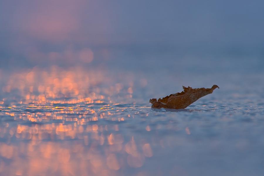 Blatt auf dem Eis bei Sonnenuntergang