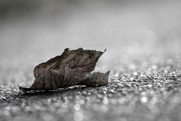Blatt auf der Straße