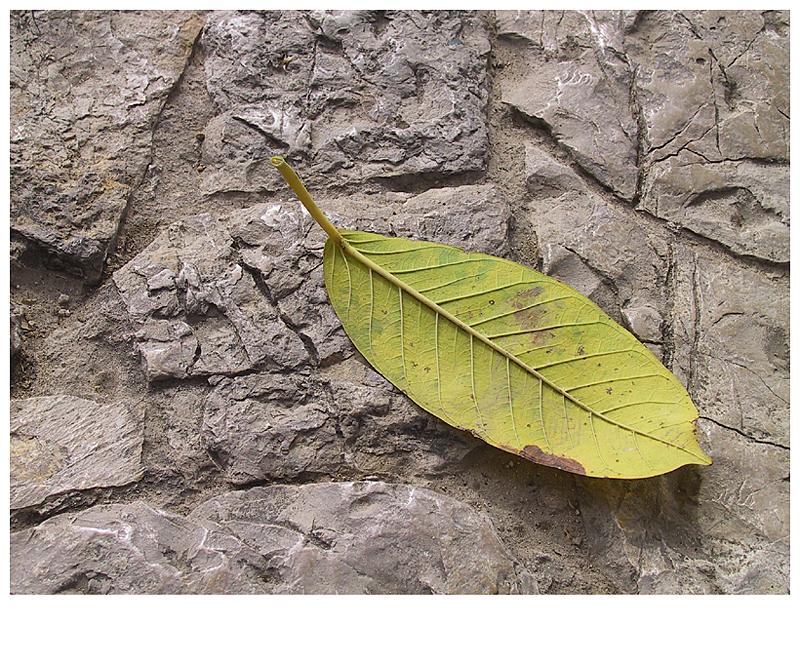 Blatt auf Stein