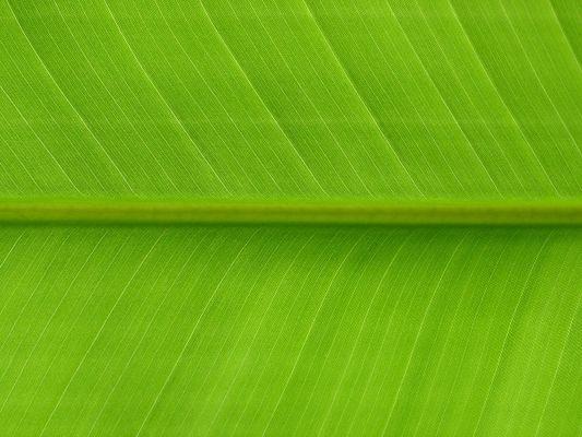 Blatt eines Bananenbaumes in Thailand