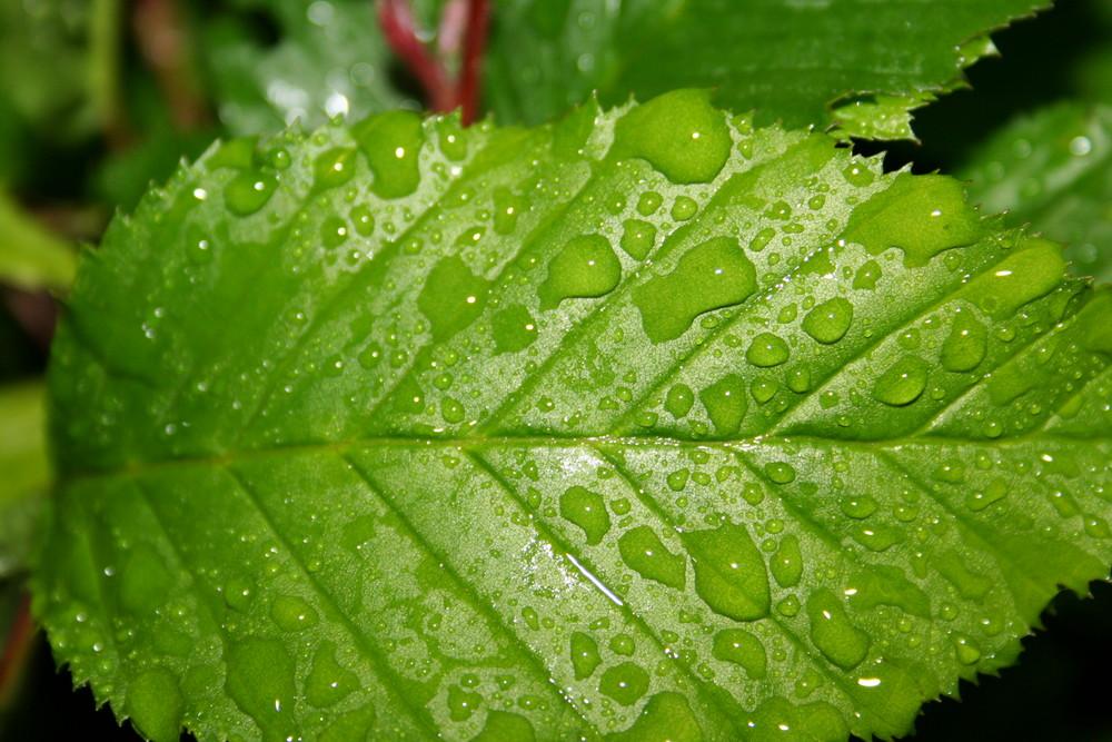 Blatt im Regen