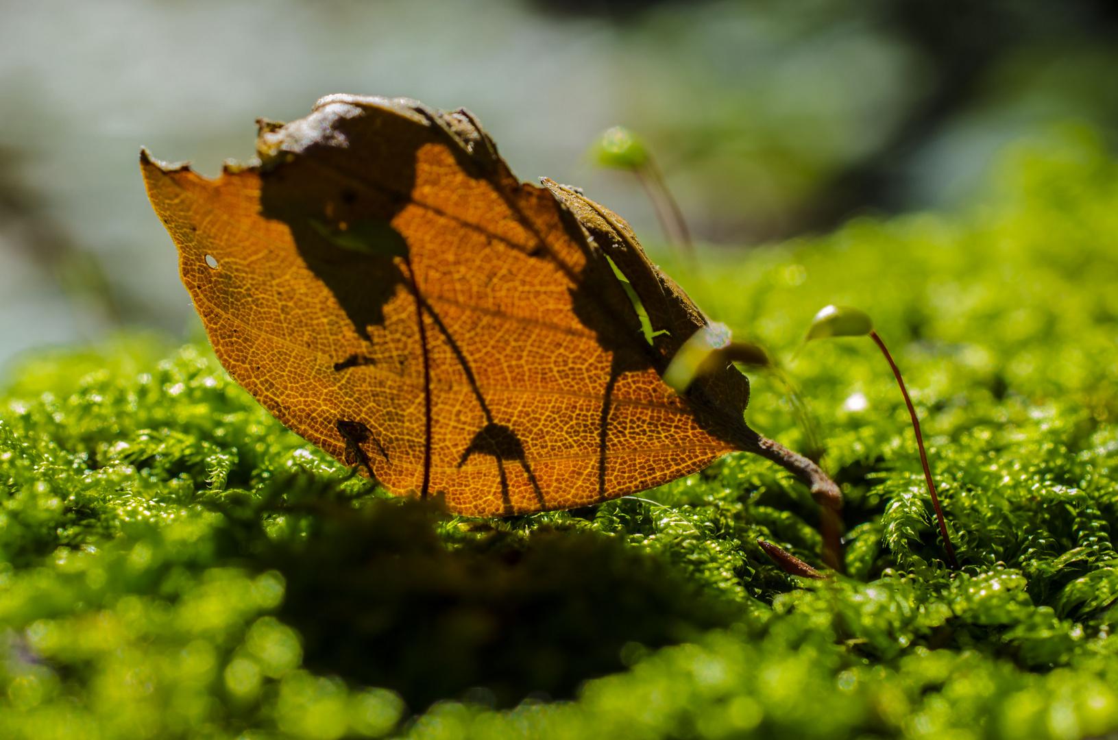 Blatt im Wald