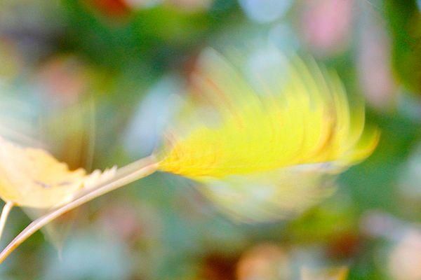 Blatt im Wind