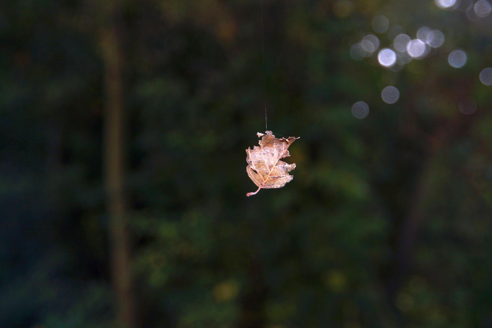 Blatt im Wind, getragen von einem Spinnenfaden