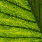 Blatt - Natürliche Strukturen (6)