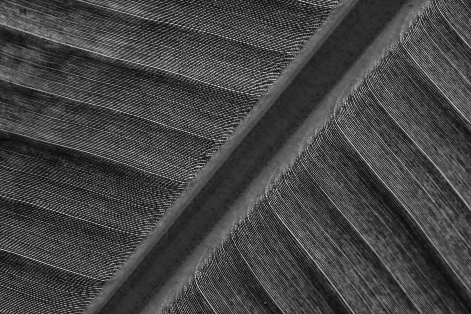 Blatt Struktur