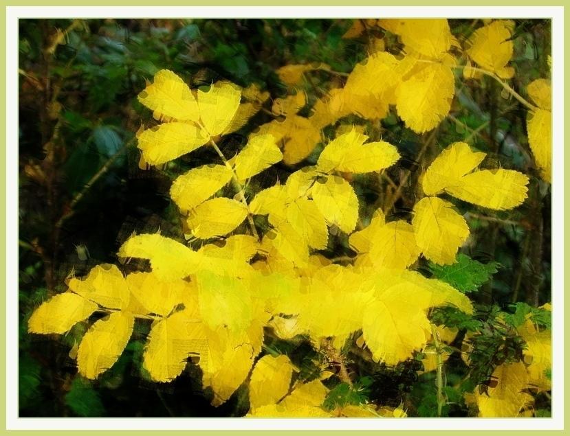 Blattgold 2