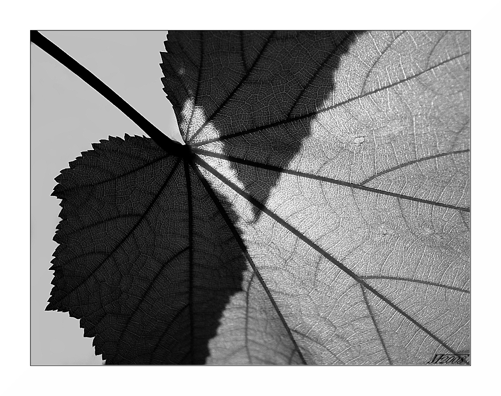 Blattwerk / foliage
