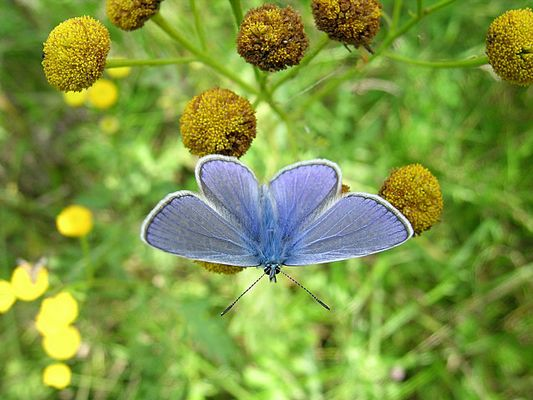 Blau :)