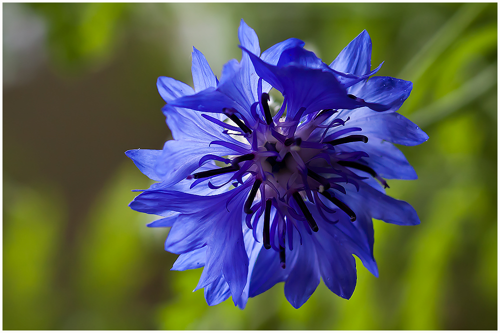 *blau*