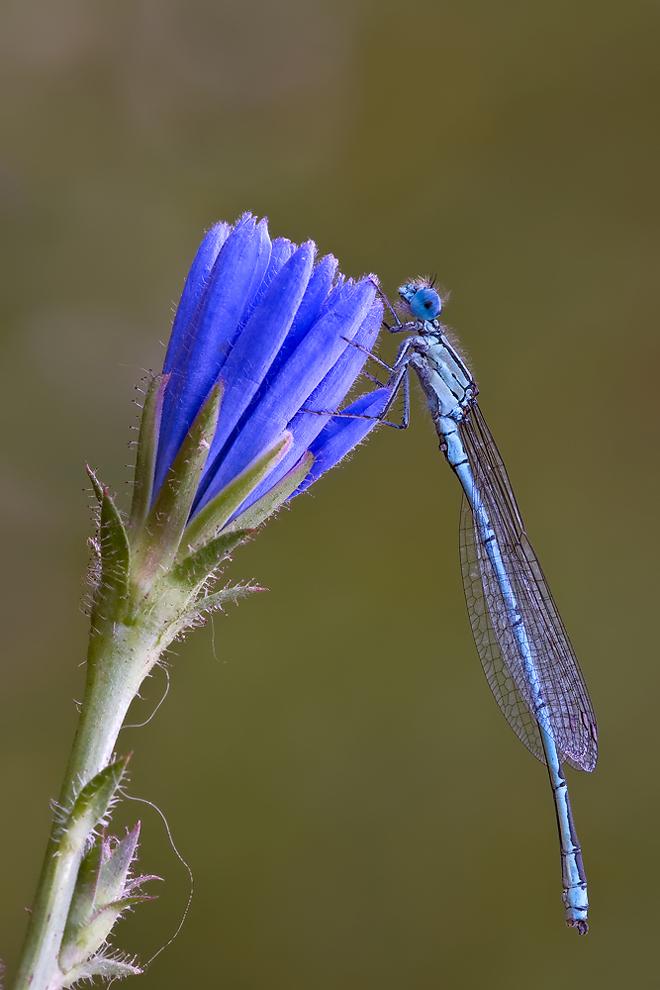 Blau an Blau