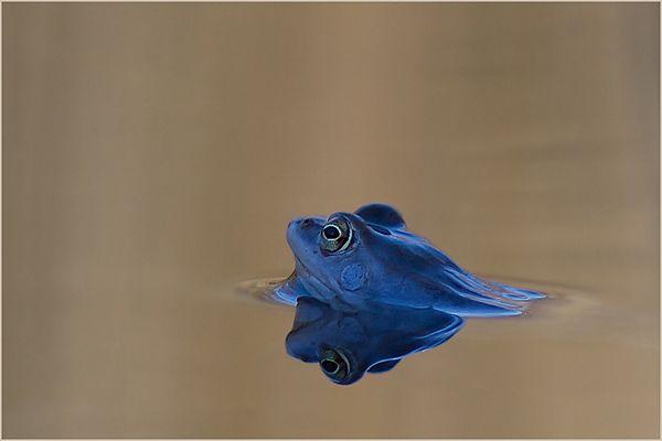 blau...