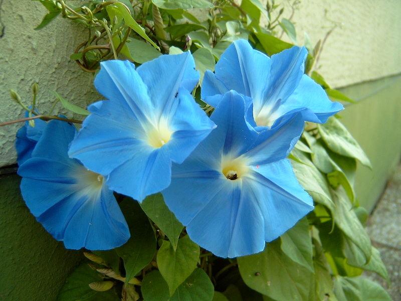 Blau, blau, blau