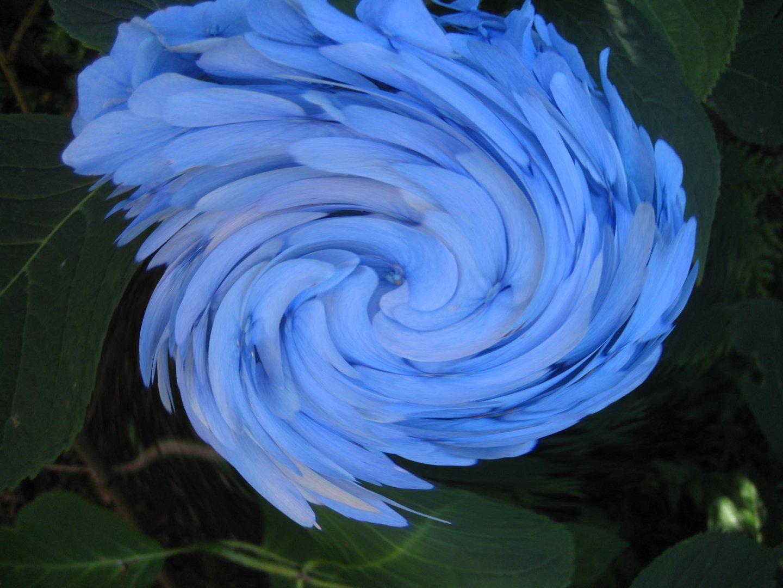 Blau ,Blau blüht.....