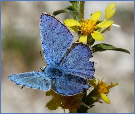 Blau-Gelb ;-)