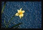 Blau * Gelb 2009