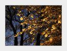 Blau-Gelb 5, im Herbst