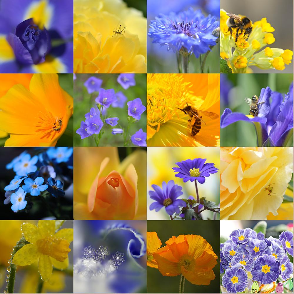 blau-gelb-impressionen