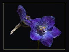 Blau gelbe Blüte