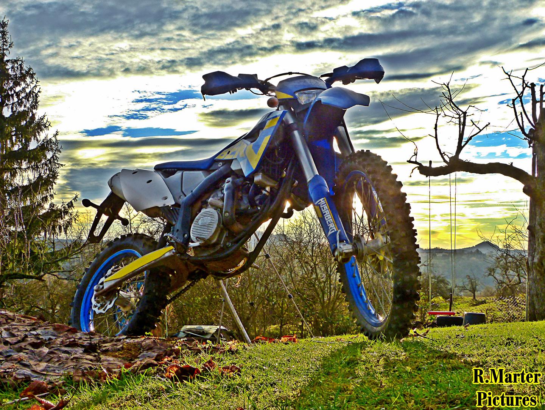 Blau Gelber Teufel
