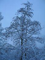 Blau im Schnee