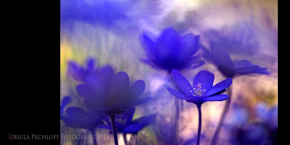 Blau- Lila- Laune