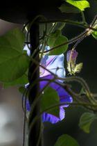 blau lila violett... Frauen haben 1000 Namen für 1 Farbe