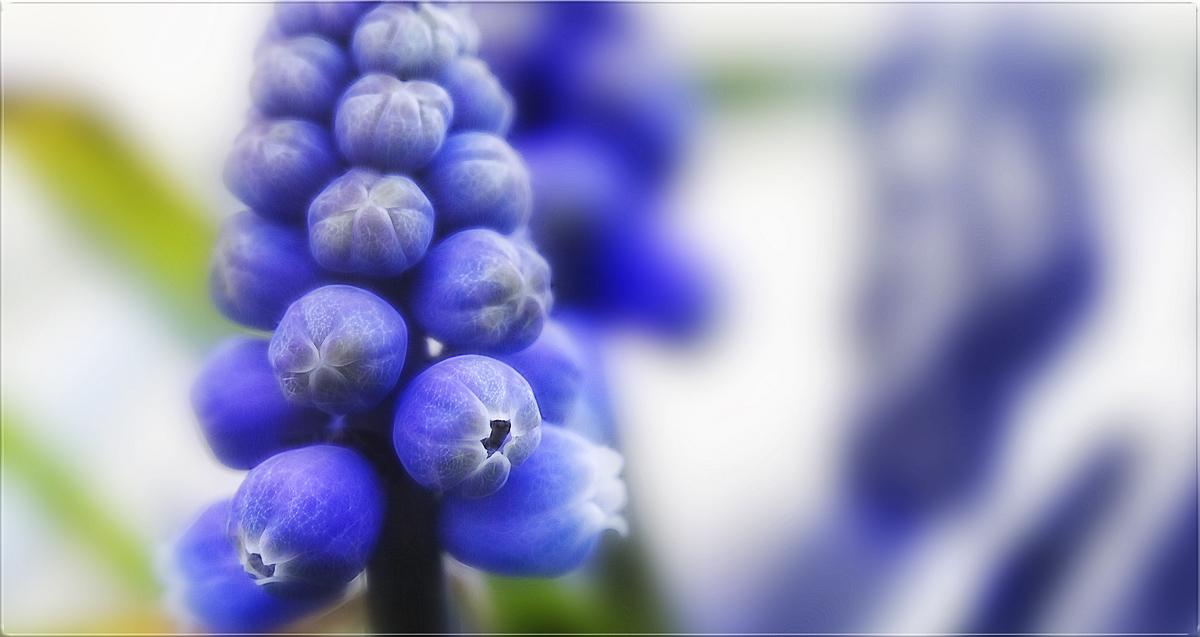 blau sichten ...