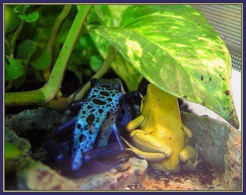Blau u.Gelb