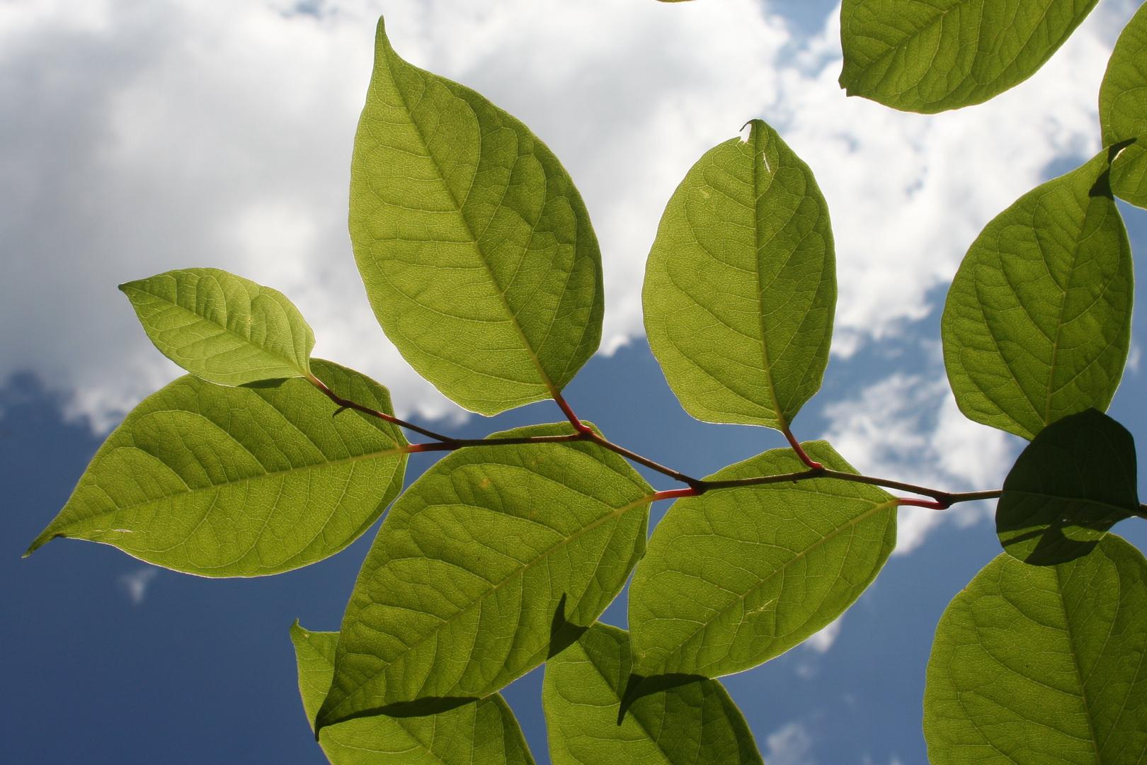 Blau und Blätter