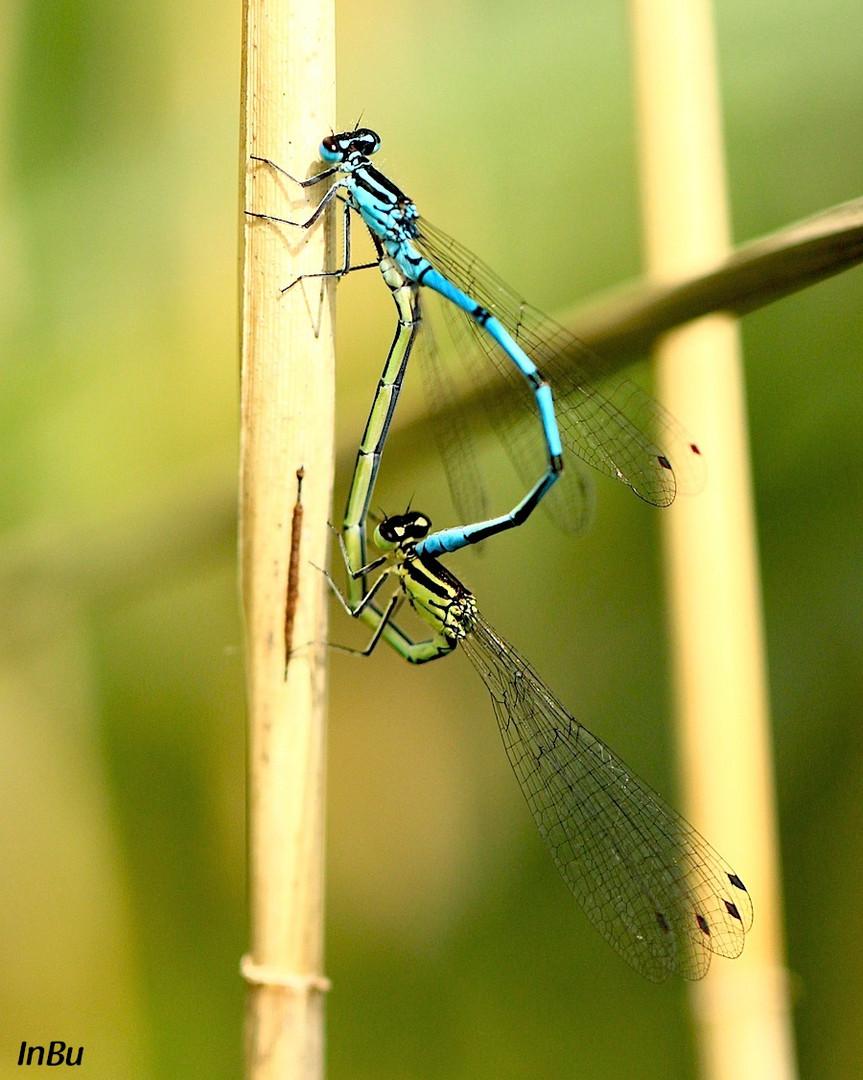 blau und grün