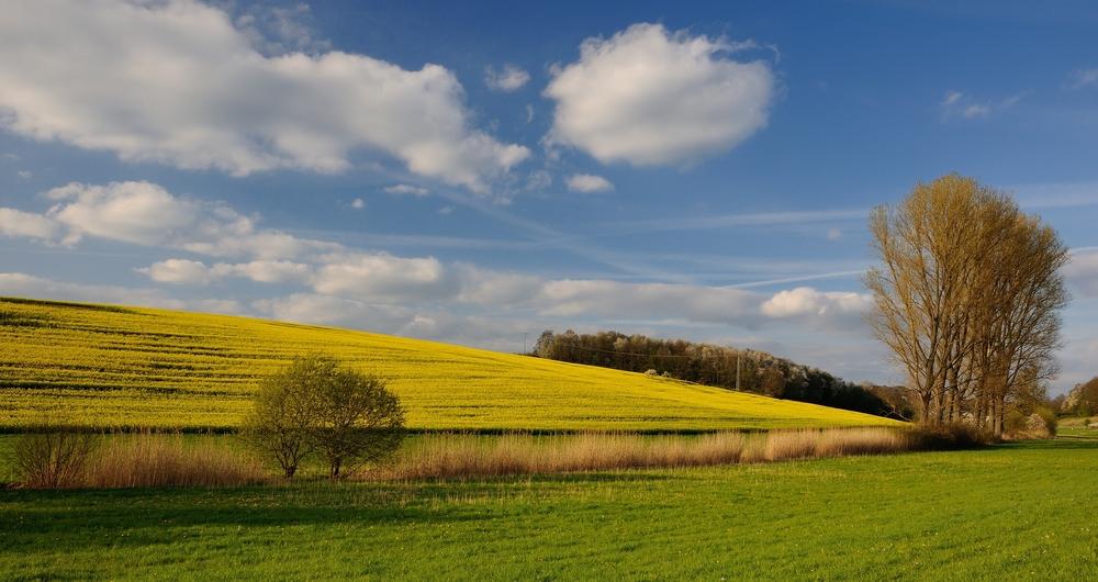 Blau, Weiß, Gelb und Grün, die Pfalz in der Abendsonne, es ist doch schön auf der Welt zu sein.
