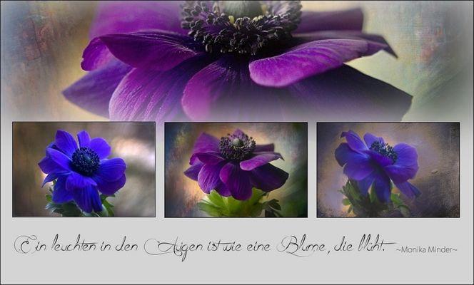 ~Blaue Anemone~