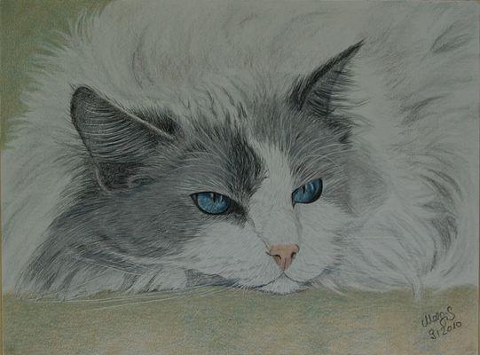 Blaue Augen in wuscheligem Fell