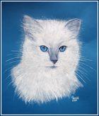 Blaue Augen, weißes Fell