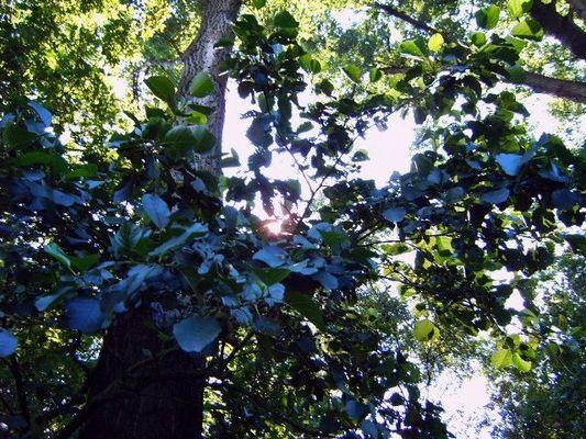 Blaue Blätter gibt es nur im Zauberwald!