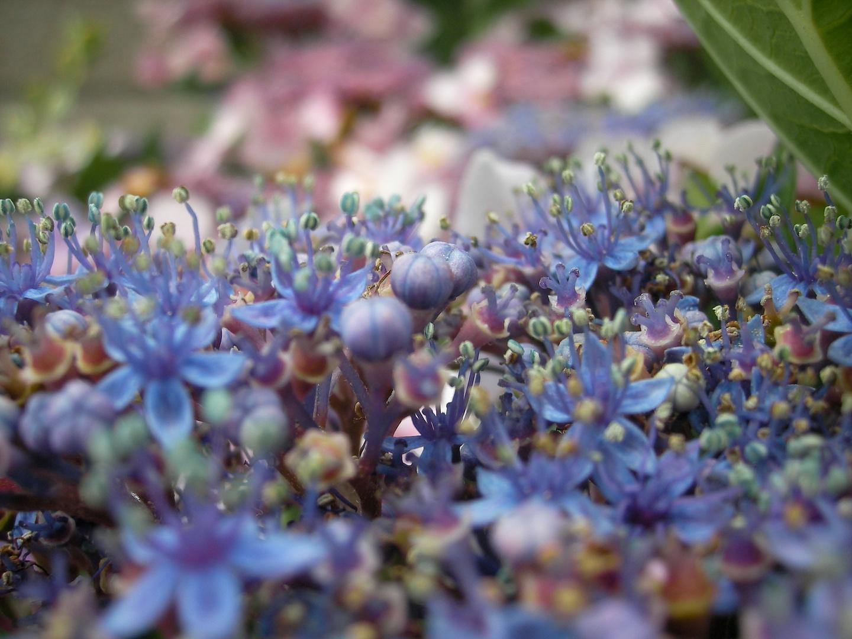 Blaue Blümchen