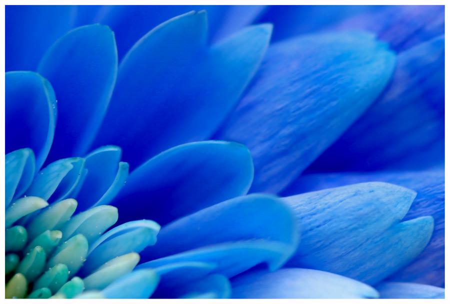 Blaue Blümchen Impression ....