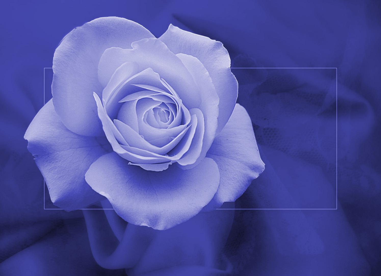Hintergrundbilder Blaue Blume: BLAUE BLUME DER ROMANTIK Foto & Bild