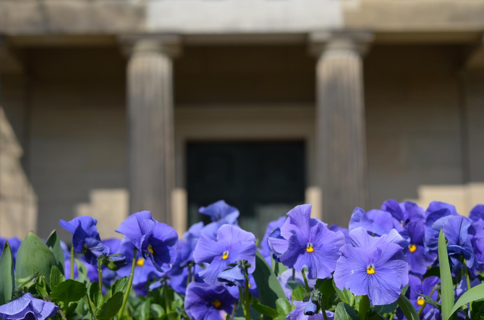 Blaue Blumen vor dem Mausoleum
