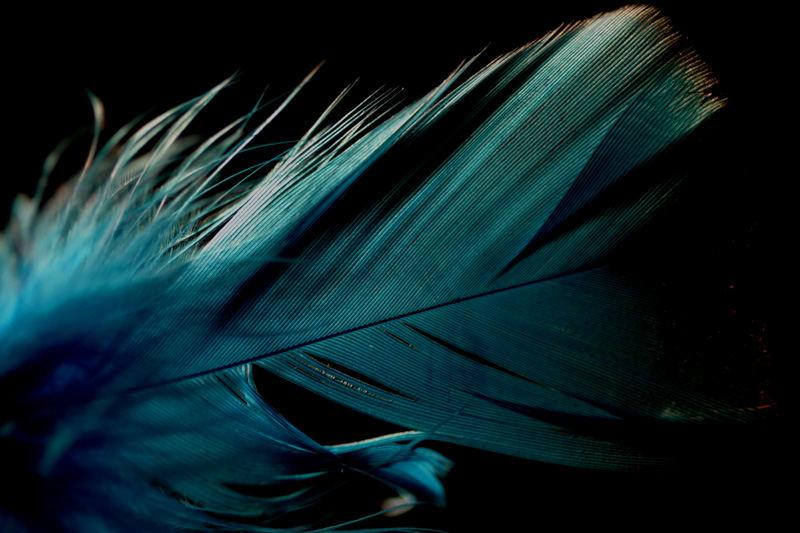 Blaue Feder II